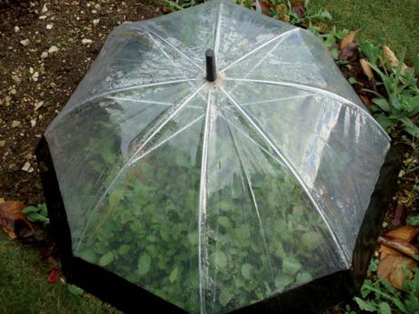 Recycle an old umbrella into a fold-away cloche.