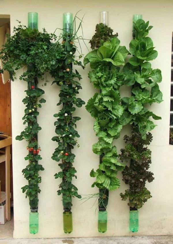 Vườn rau dọc.  Nó cho phép thực vật mở rộng lên trên thay vì phát triển dọc theo bề mặt của khu vườn.  Không chiếm nhiều không gian và trông rất đẹp cùng một lúc.