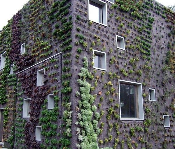 Bức tường sống ở hà lan.  Nó cho phép thực vật mở rộng lên trên thay vì phát triển dọc theo bề mặt của khu vườn.  Không chiếm nhiều không gian và trông rất đẹp cùng một lúc.