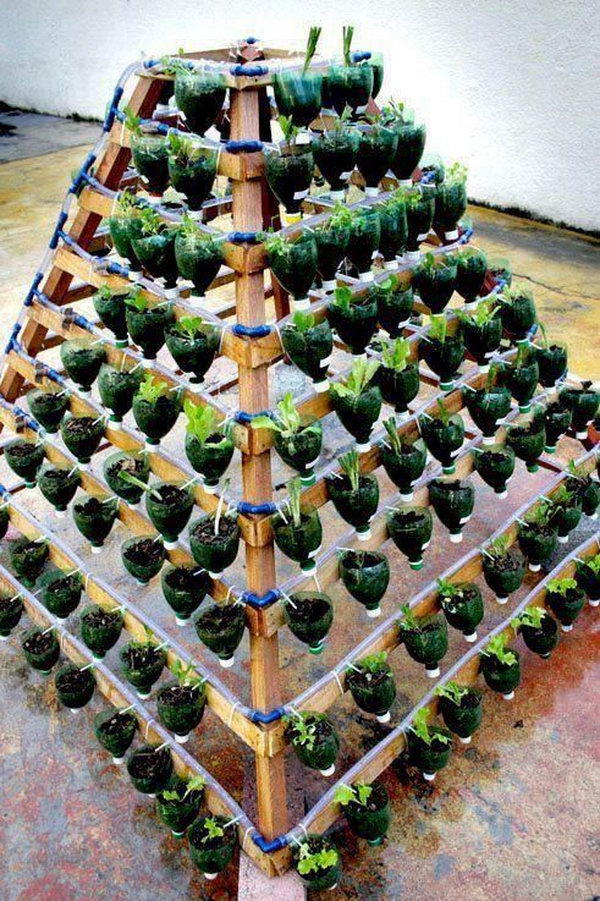 Vertical vegetable garden from plastic bottles. It allows plants to extend upward rather than grow along the surface of the garden. Doesn't take a lot of space and look so beautiful at the same time.