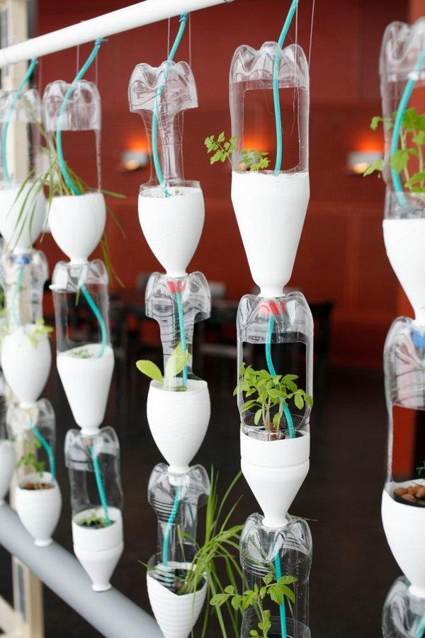 Trang trại cửa sổ thủy canh.  Nó cho phép thực vật mở rộng lên trên thay vì phát triển dọc theo bề mặt của khu vườn.  Không chiếm nhiều không gian và trông rất đẹp cùng một lúc.