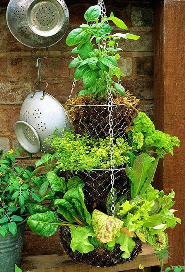 Hanging basket. It allows plants to extend upward rather than grow along the surface of the garden. Doesn't take a lot of space and look so beautiful at the same time.