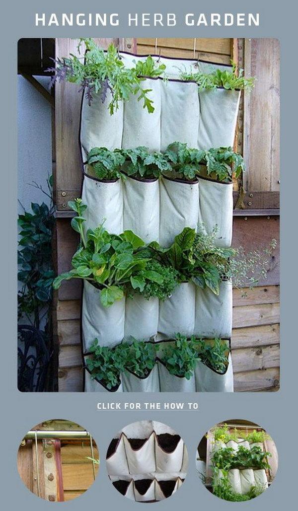 DIY giày treo vườn thảo mộc.  Nó cho phép thực vật mở rộng lên trên thay vì phát triển dọc theo bề mặt của khu vườn.  Không chiếm nhiều không gian và trông rất đẹp cùng một lúc.