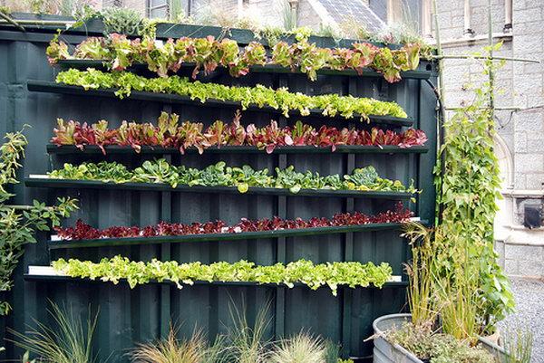 Nông trại thẳng đứng thực sự.  Nó cho phép thực vật mở rộng lên trên thay vì phát triển dọc theo bề mặt của khu vườn.  Không chiếm nhiều không gian và trông rất đẹp cùng một lúc.
