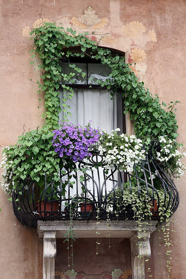 White and purple petunias along with other vined plants cascade from the wrought iron balcony.