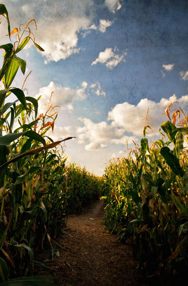 Get Lost in a Cornfield. It's so fun to get lost together in a corn maze. You can also have a race about picking corns.
