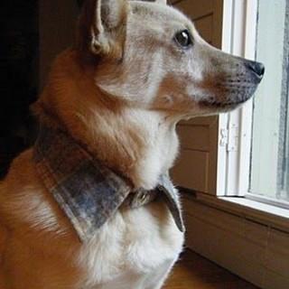 Cool DIY Dog Collars