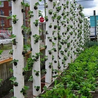 20+ Cool Vertical Gardening Ideas