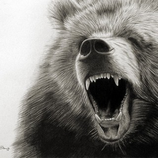 10+ Bear Drawings Showcase