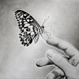 10+ Beautiful Butterfly Drawings for Inspiration