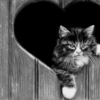 10 Cute Cat Drawings Showcase