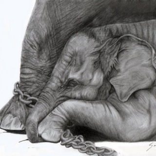 10+ Excellent Elephant Drawings for Inspiration