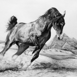 10+ Cool Horse Drawings for Inspiration