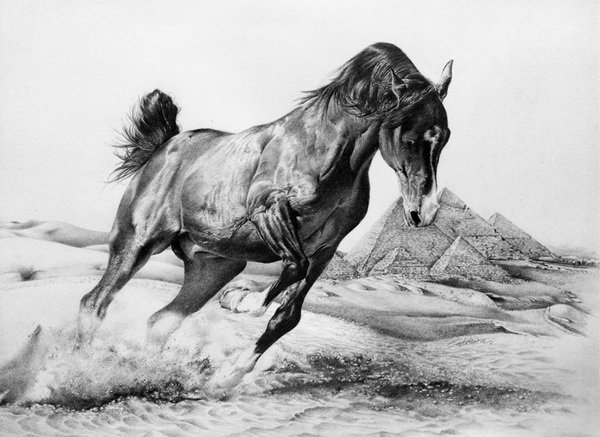 horse drawing 1