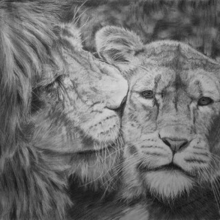 10+ Cool Lion Drawings for Inspiration