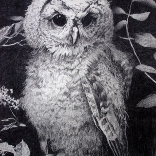10+ Clever Owl Drawings for Inspiration
