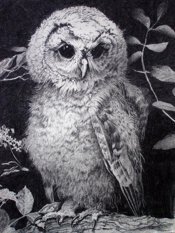 owl drawing 1
