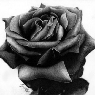 10+ Beautiful Rose Drawings for Inspiration