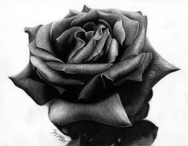 10 beautiful rose drawings for inspiration 2017 for Pretty rose drawings