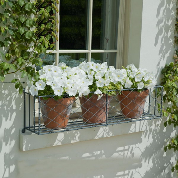 Metal Window Box with White Flowers in Terracotta Pots.