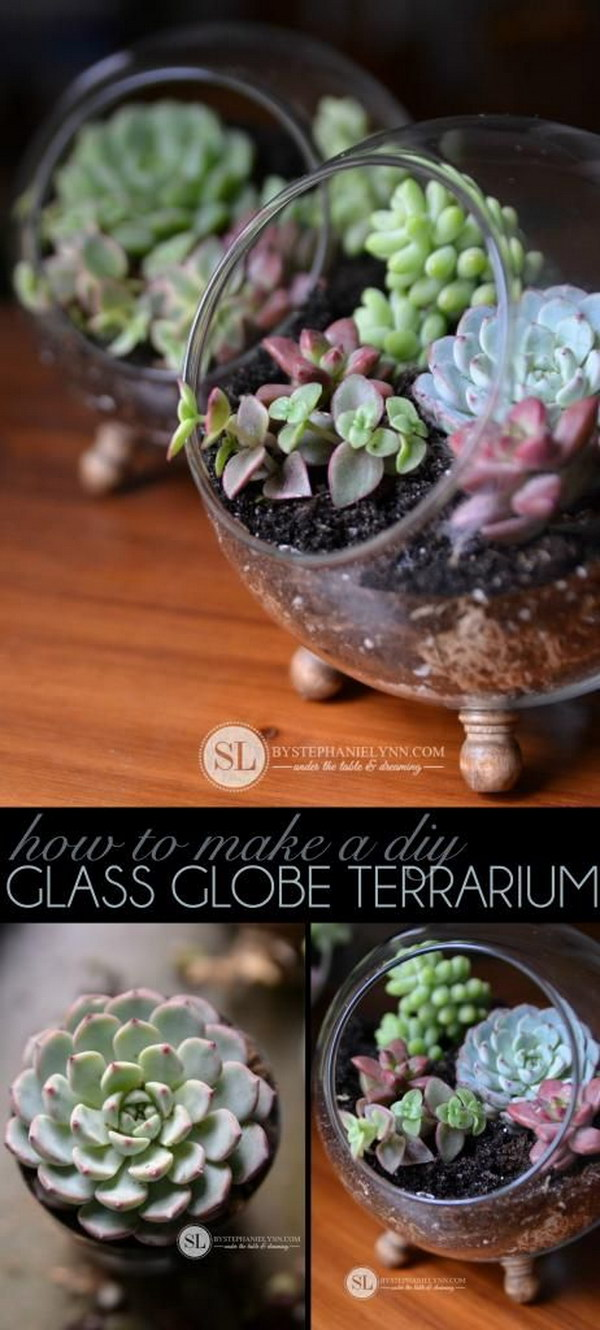 DIY Glass Globe Succulent Terrariums .