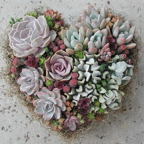 Heart Shape Succulent Wreath.