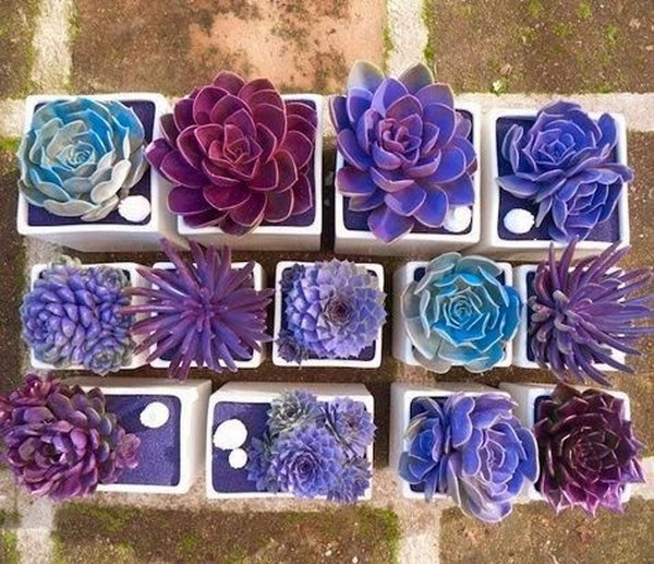 Spray Painted Succulent  Arrangement.