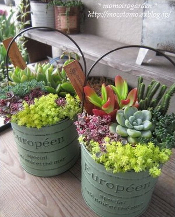Buckets of Succulents.