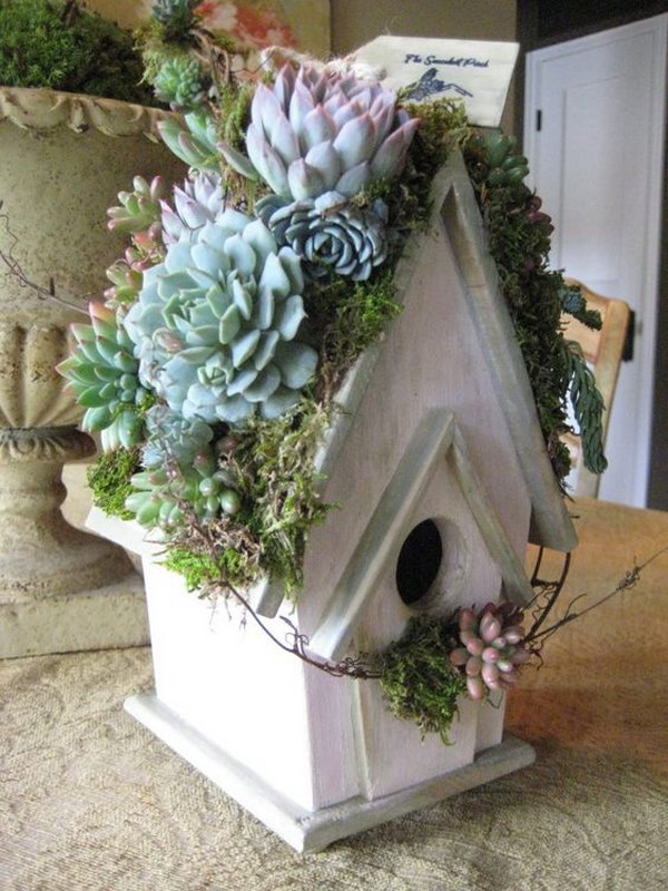 Rooftop Succulent Garden Birdhouse.