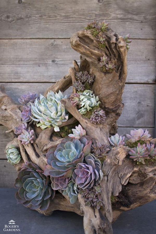 Driftwood Succulent Planter.