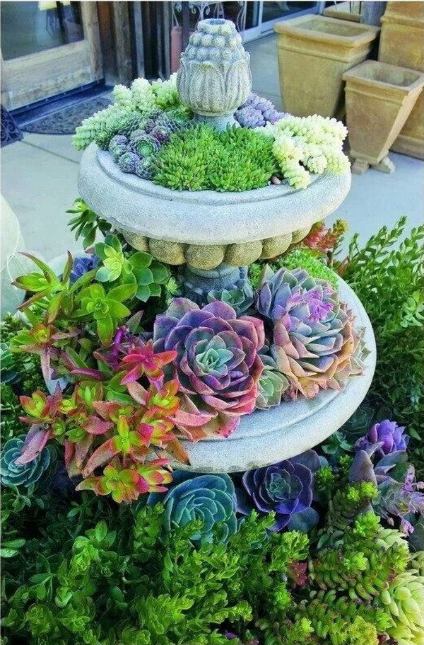 Fountain with Succulents Planted Instead of Water.