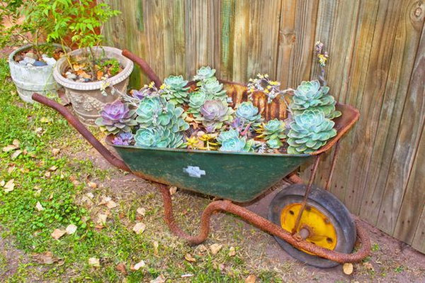 Wheelbarrow Planted With Succulents.