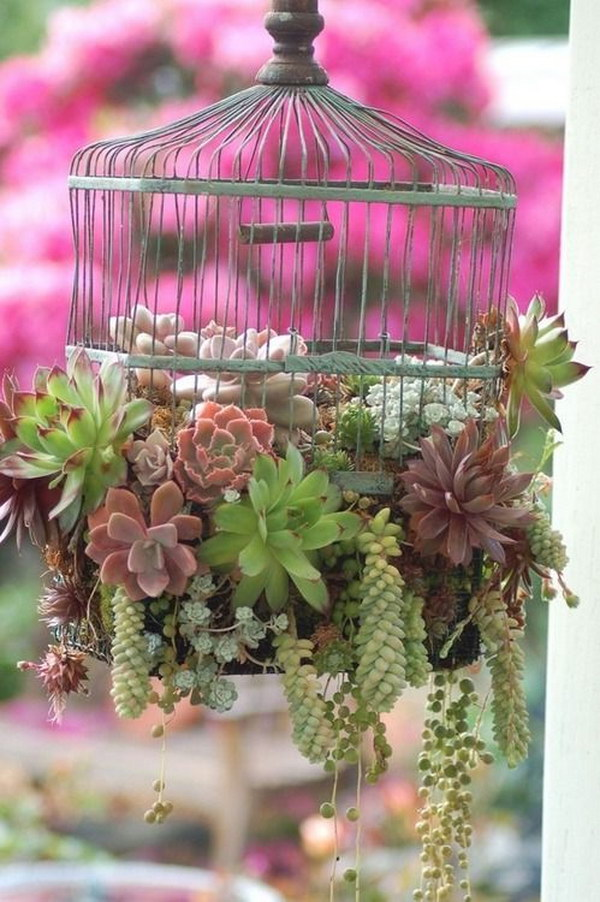 Old Birdcage Succulents Planter.