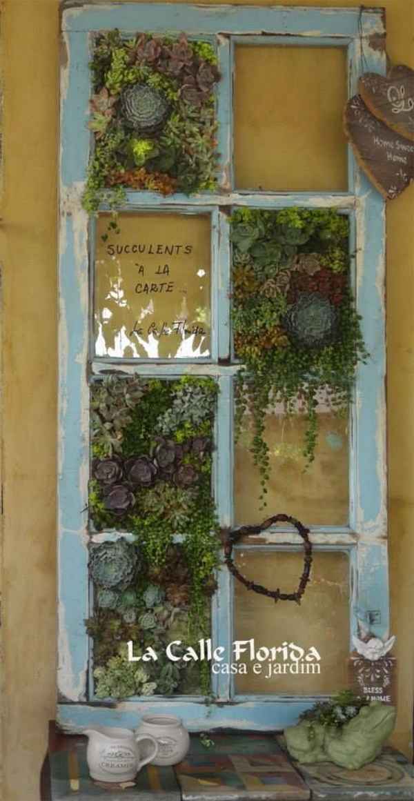 Succulents And Old Windows.