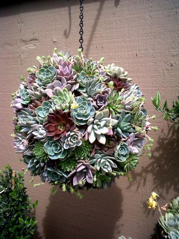hanging succulent ball