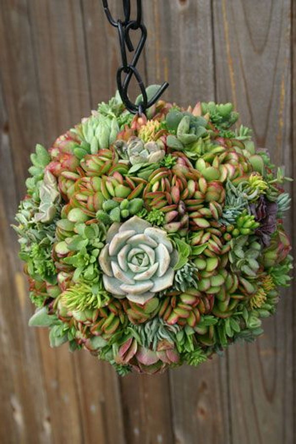 Hanging Succulent Ball.