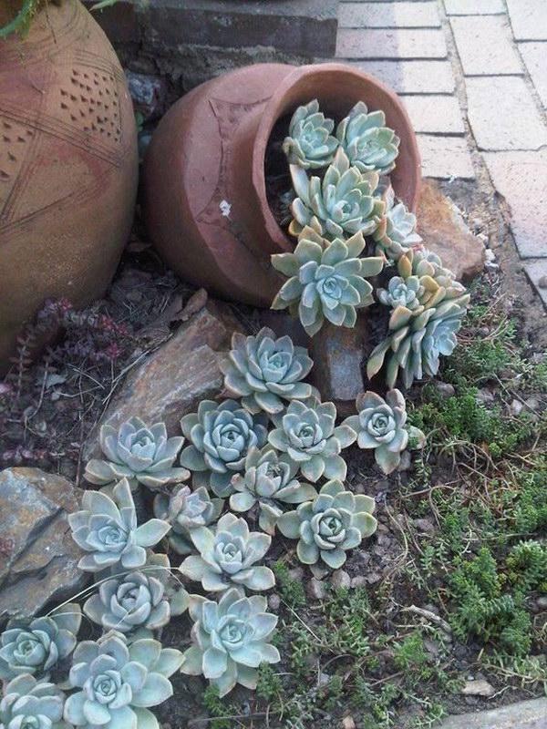 Spilling Pot Succulent Garden.