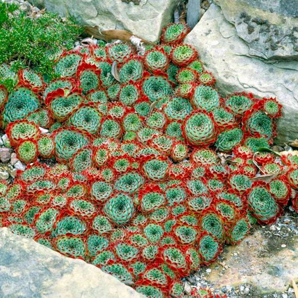 Creative indoor and outdoor succulent garden ideas 2017 create a mosaic made from succulents along side a pathway or for the planter under the a window succulent edging workwithnaturefo