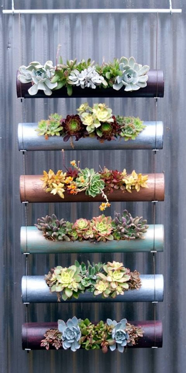 Vertical Hanging Succulents.