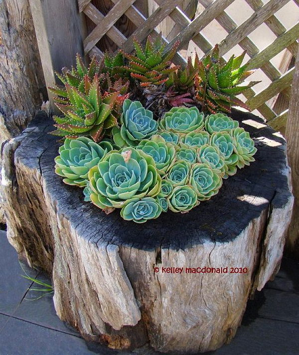 Tree Stump Succulent Planters.