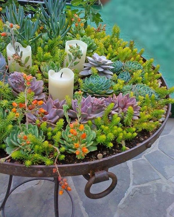 Creative indoor and outdoor succulent garden ideas 2017 for Giardino wok