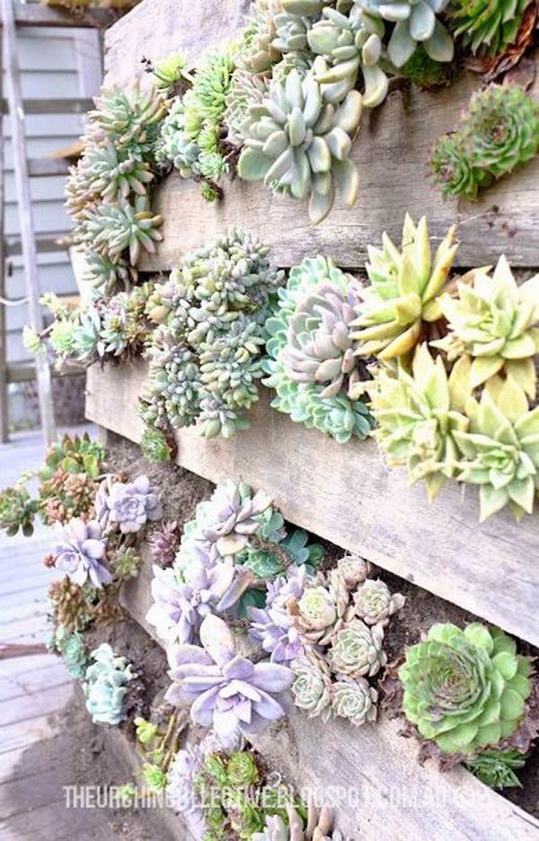 DIY Recycled Pallet Vertical Succulent Garden.