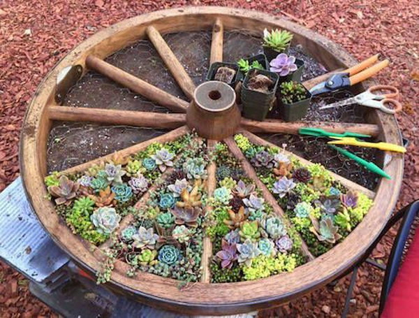 Recycled Wagon Wheel Succulent Garden.