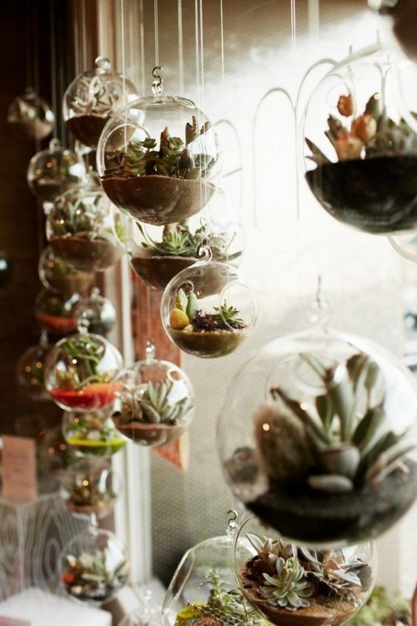 Hanging Terrariums.