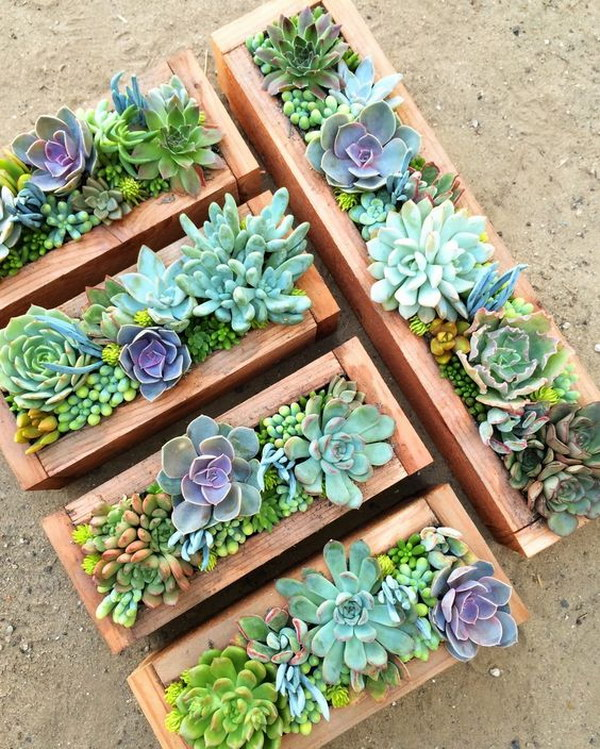Creative indoor and outdoor succulent garden ideas 2017 for Garden arrangement ideas