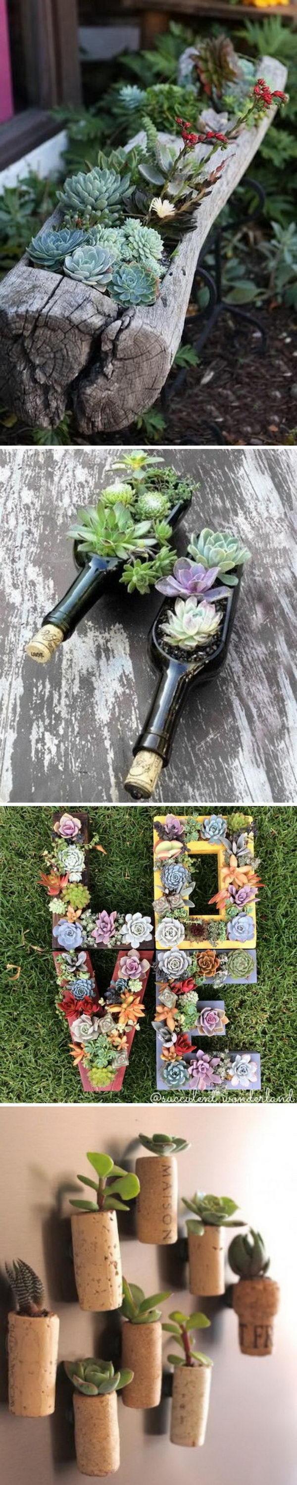 Creative Indoor And Outdoor Succulent Garden Ideas.