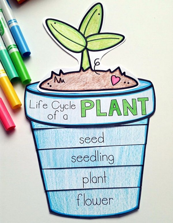 Plant Life Cycle Craft.