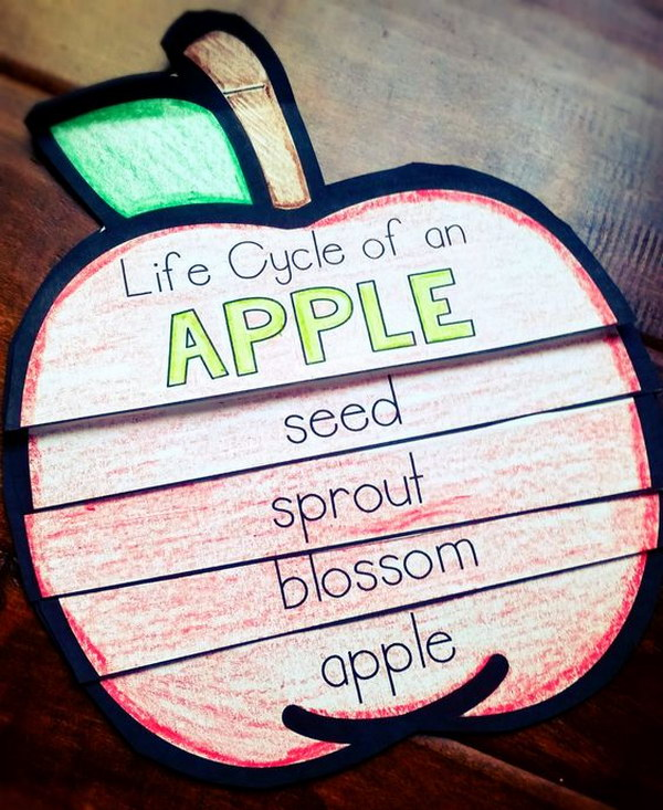 Apple Life Cycle Flip Book.