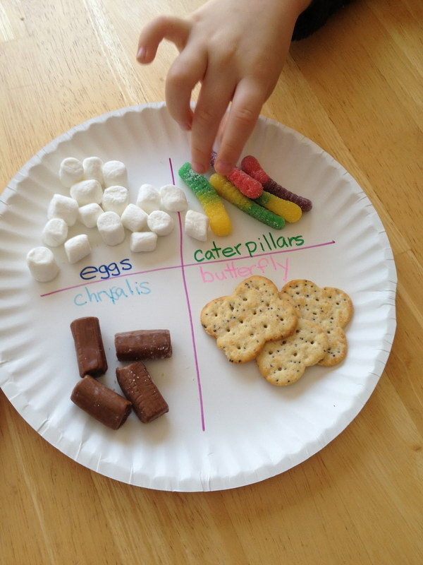 Edible Butterfly Life Cycle.