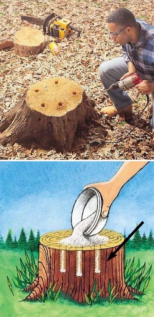 Tree Stump Removal.